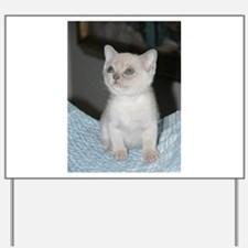 burmese platinum kitten Yard Sign