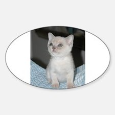 burmese platinum kitten Decal