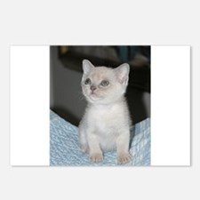 burmese platinum kitten Postcards (Package of 8)