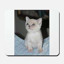 burmese platinum kitten Mousepad