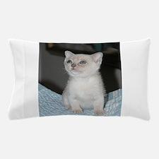 burmese platinum kitten Pillow Case