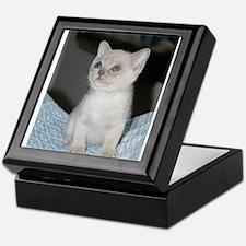 burmese platinum kitten Keepsake Box