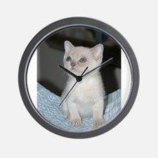 burmese platinum kitten Wall Clock