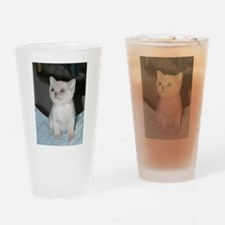 burmese platinum kitten Drinking Glass