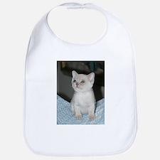 burmese platinum kitten Bib