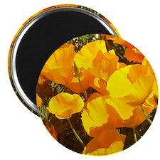 california poppies + wildflowers Magnet