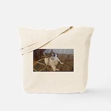 Funny cat striking a pose Tote Bag