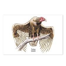 Turkey Vulture Bird Postcards (Package of 8)