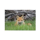 Fox Single