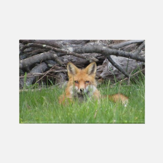 Cute Foxes Rectangle Magnet
