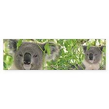 Helaine's Koala Bear Bumper Bumper Sticker