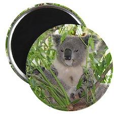 Helaine's Koala Bear Magnet