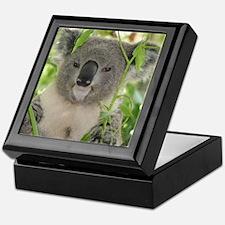 Helaine's Koala Bear Keepsake Box