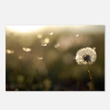 Dandelion Wish Postcards (Package of 8)
