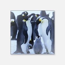 penguins-emperor-antarctic-life-52509.jpeg Sticker
