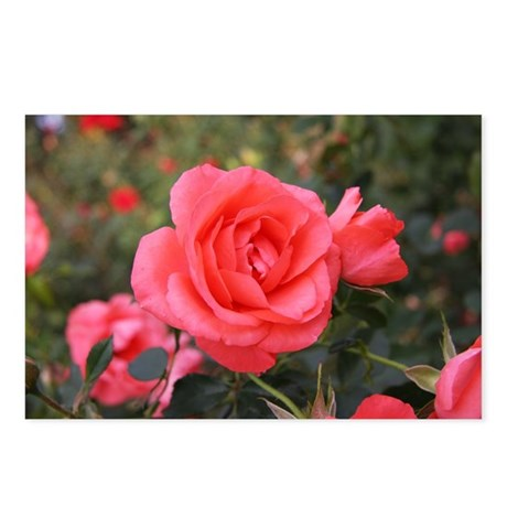 Pink Rose (A) Postcards (Package of 8)