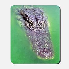 Gator Waiting For You Mousepad