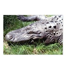 Alligator Head Postcards (Package of 8)