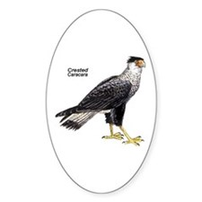 Crested Caracara Bird Oval Decal