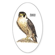 Peregrine Falcon Bird Oval Decal