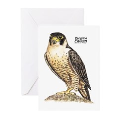 Peregrine Falcon Bird Greeting Cards (Pk of 10