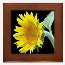 Small Sunflower Framed Tile