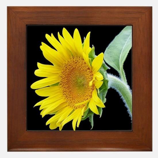 Small Sunflower Framed Tile