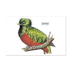 Quetzal Rain Forest Bird Posters