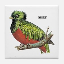 Quetzal Rain Forest Bird Tile Coaster