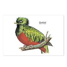 Quetzal Rain Forest Bird Postcards (Package of 8)