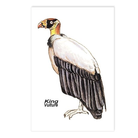 King Vulture Bird Postcards (Package of 8)