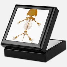 Amphibian Skeleton Keepsake Box