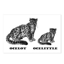 Cool Little cat Postcards (Package of 8)