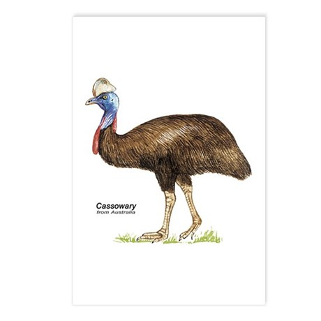 Cassowary Australian Bird Postcards (Package of 8)