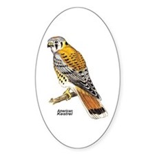 American Kestrel Bird Oval Decal