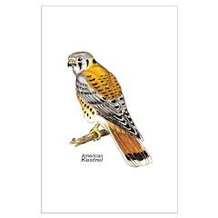 American Kestrel Bird Posters