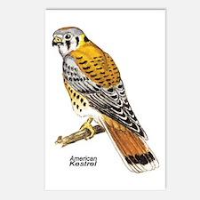 American Kestrel Bird Postcards (Package of 8)