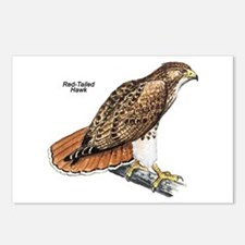 Red-Tailed Hawk Bird Postcards (Package of 8)