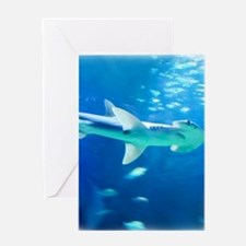 Hammerhead Shark Greeting Cards