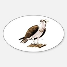 Osprey Bird of Prey Oval Decal