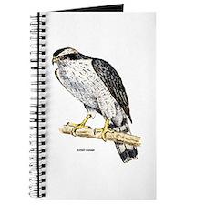 Northern Goshawk Hawk Journal