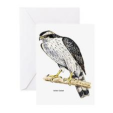 Northern Goshawk Hawk Greeting Cards (Pk of 10