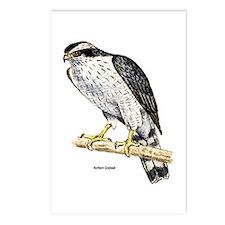 Northern Goshawk Hawk Postcards (Package of 8)