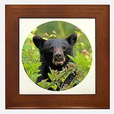 Cute Black bear Framed Tile