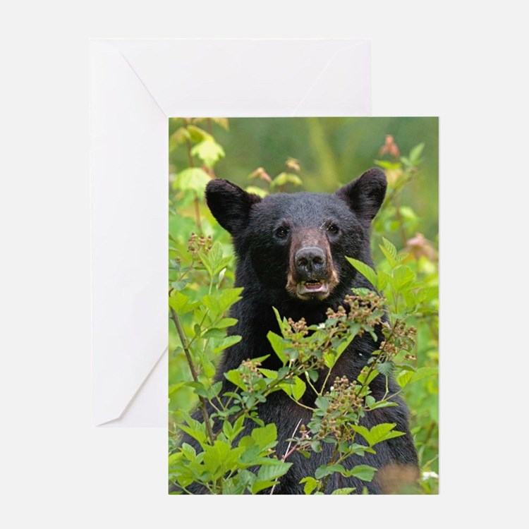 Cute Cove Greeting Card