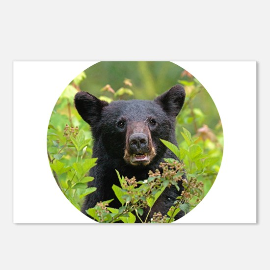 Bear Face Postcards (Package of 8)
