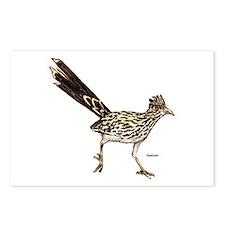 Roadrunner Bird Postcards (Package of 8)