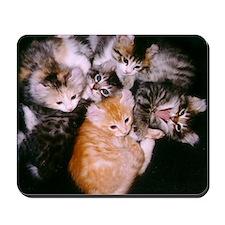 American Curl Kittens Mousepad