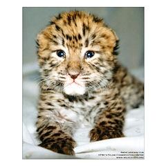 Amur Leopard cub Posters