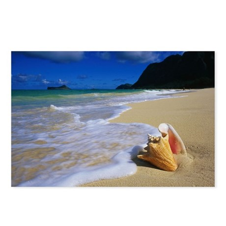 Seashell on the Shore Postcards (Package of 8)